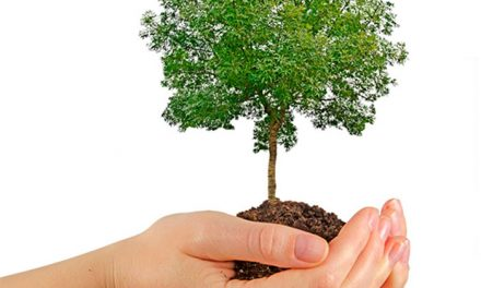 Pinto comienza las plantaciones y reposiciones de arbolado