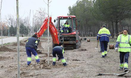 El Ayuntamiento de Getafe plantará 270 árboles en los parques de La Alhóndiga y Buenavista