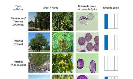 La página web municipal ofrece información sobre los niveles de polen en la ciudad
