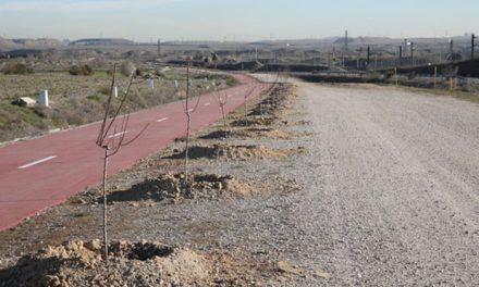 El Ayuntamiento de Getafe planta 800 árboles en Perales del Río