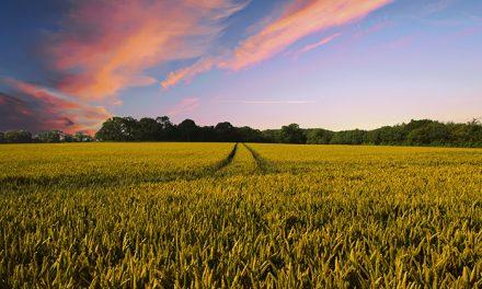La Comunidad de Madrid incrementa un 21 % las ayudas para mejorar el rendimiento agrario