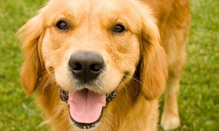 Abiertas las áreas caninas de Pinto