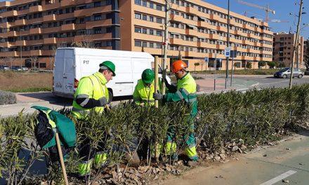 338 árboles más para Buenavista y Los Molinos