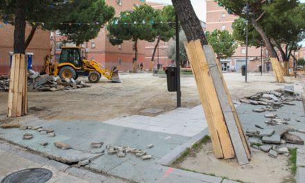 El Ayuntamiento sustituirá 8 árboles enfermos por otros sanos en la plaza de Las Margaritas