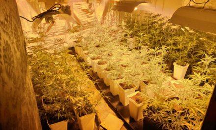 La Policía Local incauta más de 100 plantas de marihuana en un piso de La Alhóndiga