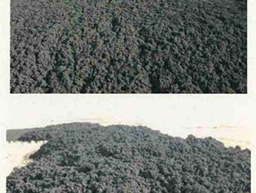 Pinto tramita las primeras denuncias por uso indebido de lodos
