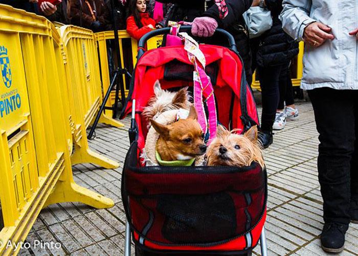 Tradición y mascotas en la celebración de San Antón